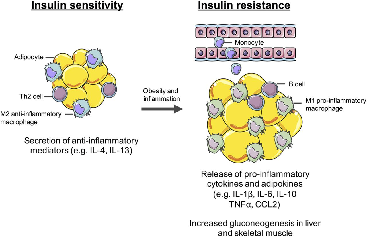 G Protein Coupled Receptors Targeting Insulin Resistance Obesity And Type 2 Diabetes Mellitus Pharmacological Reviews