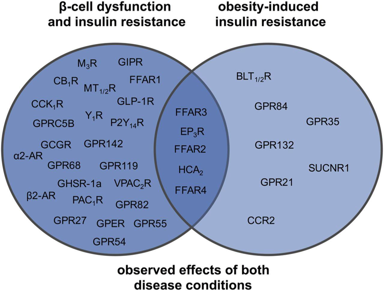 g protein u2013coupled receptors targeting insulin resistance