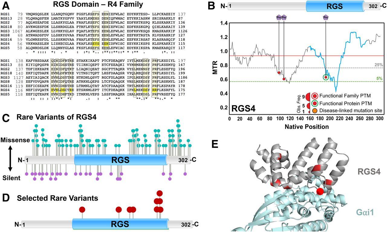 Genetic Analysis of Rare Human Variants of Regulators of G Protein