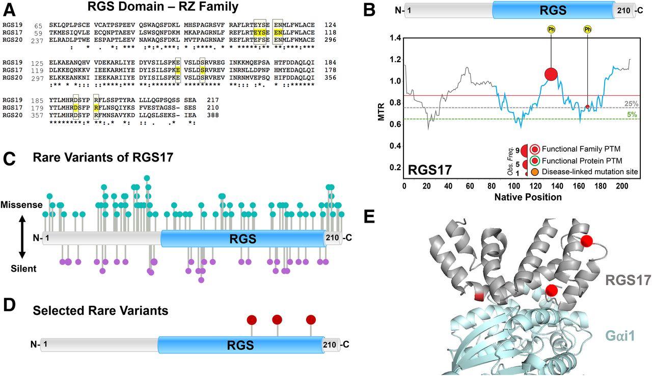 Genetic Analysis of Rare Human Variants of Regulators of G