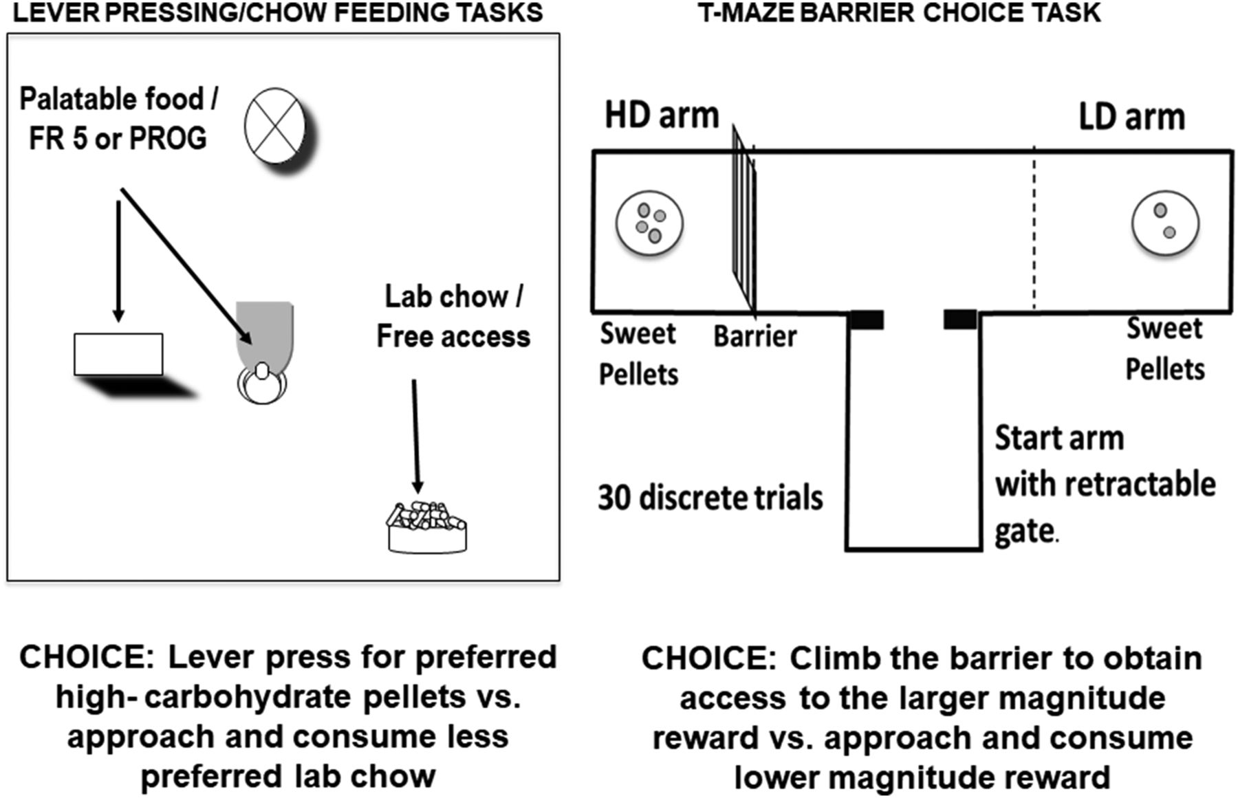 The Psychopharmacology Of Effort Related Decision Making Dopamine Simple Circuit Activity And Inquiry Download Figure