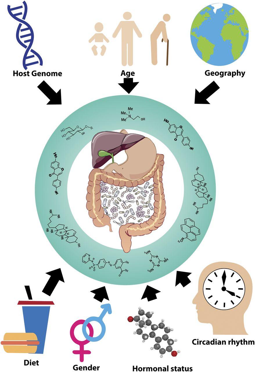 Gut Reactions: Breaking Down Xenobiotic–Microbiome