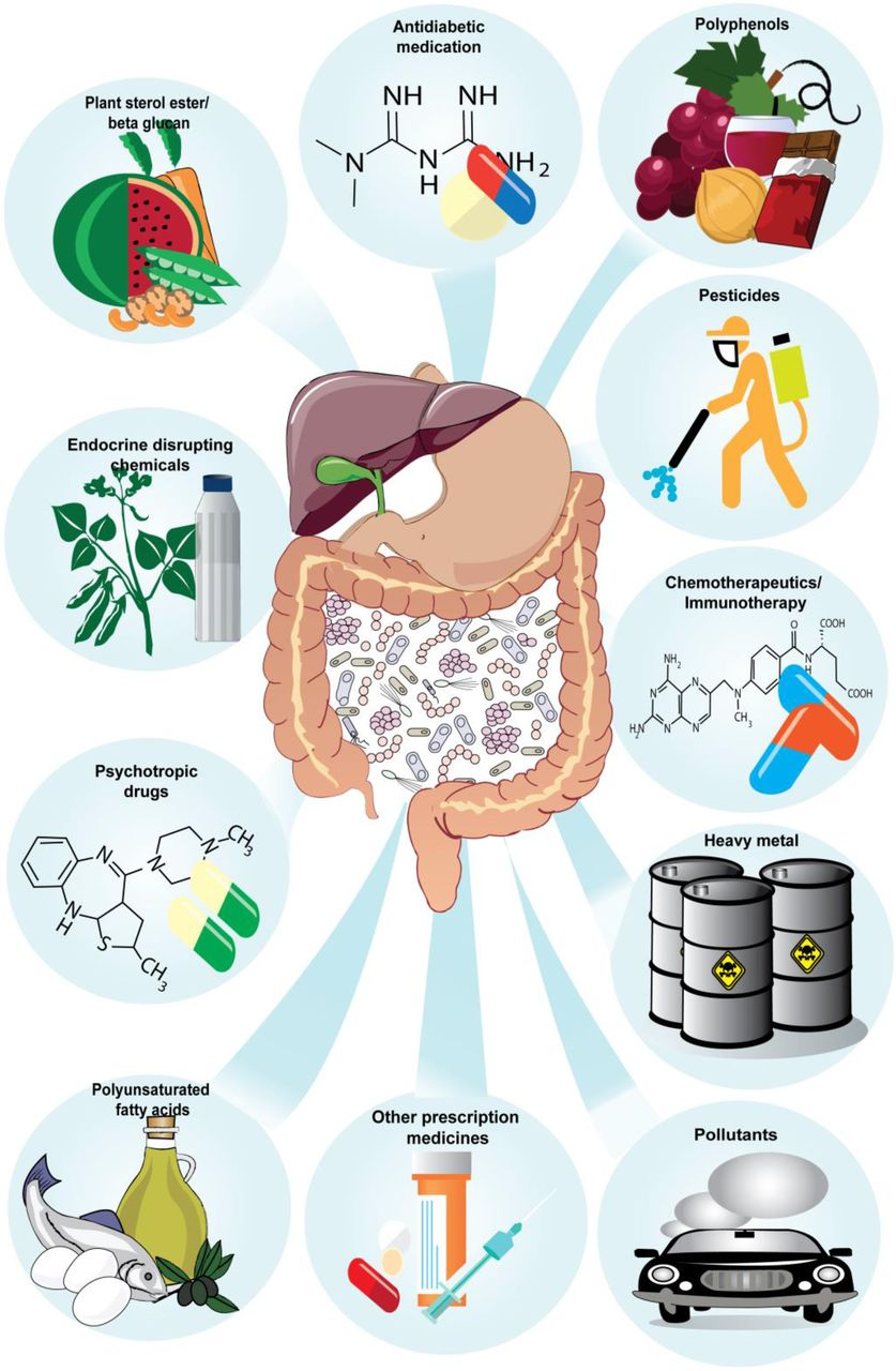 Gut Reactions: Breaking Down Xenobiotic–Microbiome