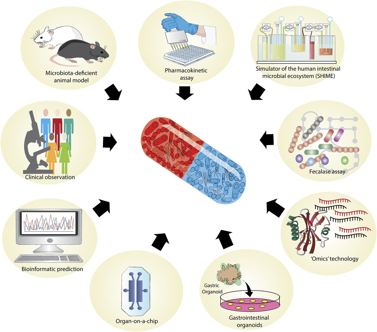 Gut Reactions: Breaking Down Xenobiotic–Microbiome Interactions